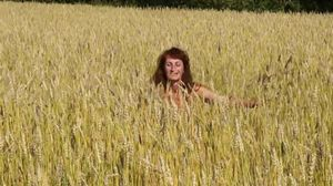 In the field of golden wheat